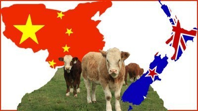 Chinese eye off NZ stake in Tasmania's biggest dairy company